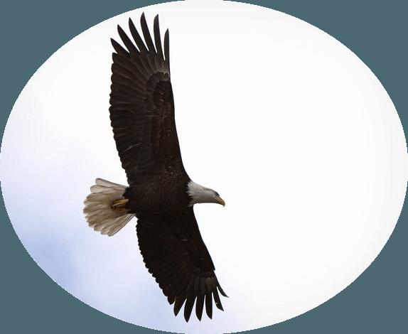 eagle_b